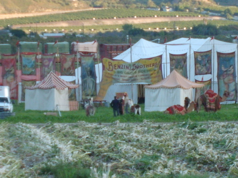 http://waterforelephantsfilm.files.wordpress.com/2010/05/s50051861.jpg